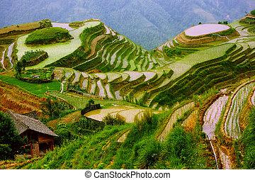 montagem, yunnan, arroz, china, terraços