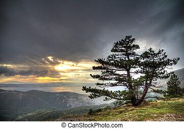 montagna, albero