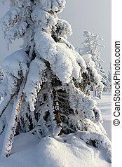 montagna, albero, neve, dresses.