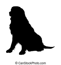 montagna, bernese, silhouette, cane