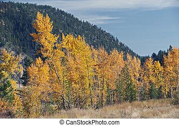 montagna, giallo, albero, cadere