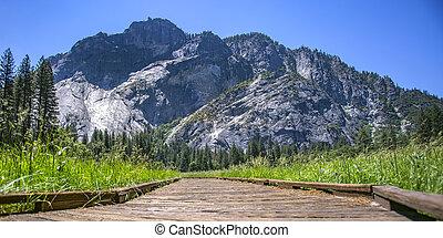 montagna, legno, ca, percorso, vista, yosemite