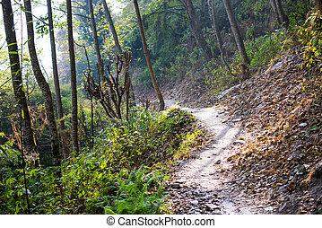 montagna, modo, trekking
