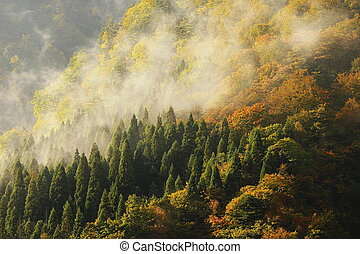 montagna, strabiliante, foschia, foresta, mattina