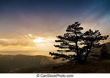 montagna, tramonto, albero