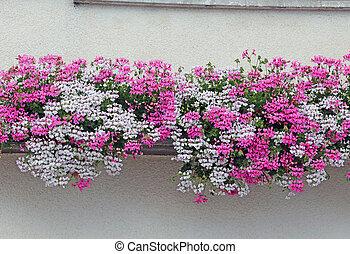 montagne, été, fleuri, géraniums, magnifique, maison, balcon