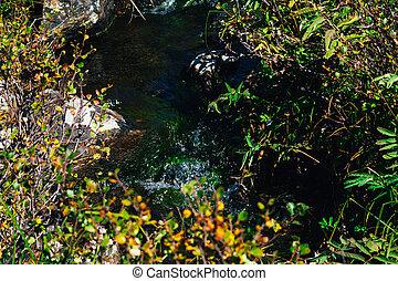 montagne, été, printemps, ruisseau, rochers, jour
