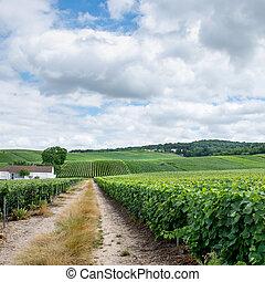 montagne, 風景, 蘭斯, de, 法國, 葡萄園