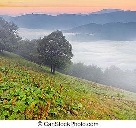 montagne, alba, nebbioso, estate