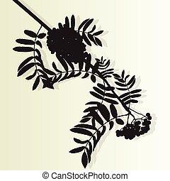 montagne, baies, vendange, feuilles, arbre, vecteur, rowan, baie, branche, cendre