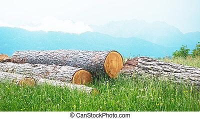montagne, bois, bûche