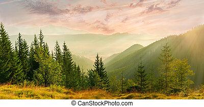 montagne, brouillard, vallée, levers de soleil, panorama