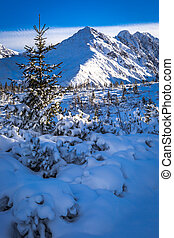 montagne, ensoleillé, hiver, jour, pic