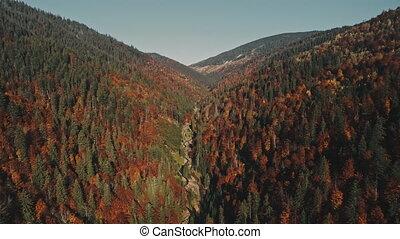 montagne, entouré, arbres, pin, enroulement, mince, rivière
