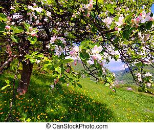 montagne, fiore apple, primavera, albero, villaggio