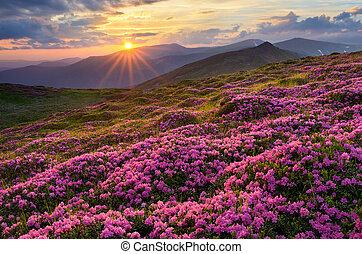 montagne, fiori, campi