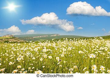 montagne, fiori, campo, grande
