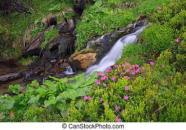 montagne, fleurs, ruisseau