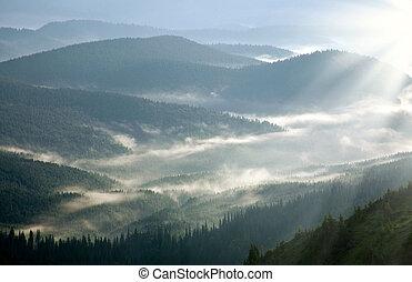 montagne, forêt, couvert, à, brume, dans, les, rayons, de,...
