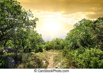 montagne, forêt, lumière soleil