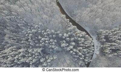 montagne, forêt, route, neigeux