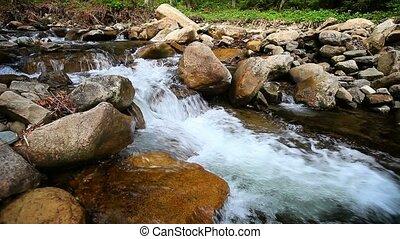 montagne, forêt, ruisseau, écoulement