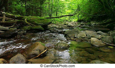montagne, forêt, ruisseau