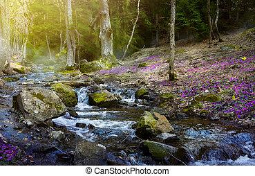 montagne, forest;, ruisseau, printemps, fleurir, fleurs