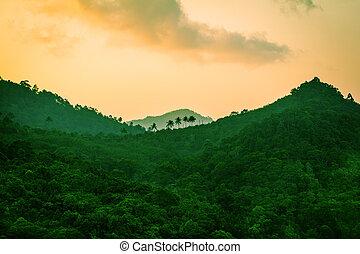 montagne, foresta pluviale
