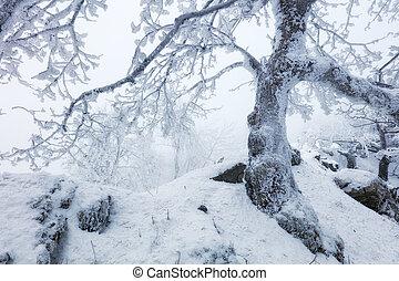 montagne, gelée, arbre, hiver
