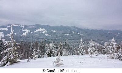 montagne, hiver, forêt