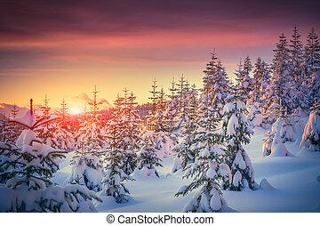 montagne, hiver, lever soleil coloré, paysage, forêt