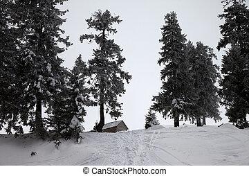 montagne, innevato, inverno legno, neve, capanna, gelido,...