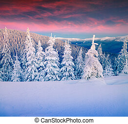 montagne, inverno, colorito, scena