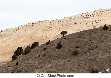 montagne, kazakhstan, désert, vallonné