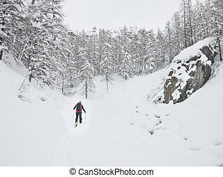 montagne, neigeux, backcountry, promenades, valley., skieur