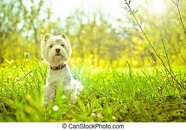 montagne occidentale terrier