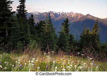 montagne, olimpico, cresta, prato, uragano, wildflowers, alpino