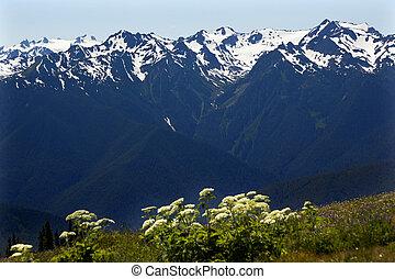 montagne, olimpico, cresta uragano, washington, parco nazionale, neve