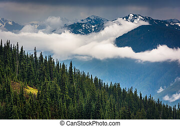montagne, olimpico, nevoso, cresta, nazionale, uragano, parco, washington., vista