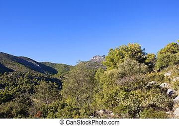 montagne, pays boisé, pin, espagnol