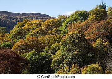 montagne, perthshire, ecosse, forêt automne, vue