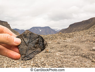 montagne, pietra, presa a terra, fondo., spitsbergen, longyearbyen, leaves., mano, svalbard, femmina, norvegia, fossile