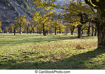 montagne, plain), ahornboden, tirol, (maple, (austria), karwendel, valle