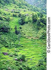 montagne, randonnée, camp, champs, népal, annapurna, paysage...