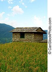 montagne, randonnée, paysage, champs, népal, camp, annapurna...