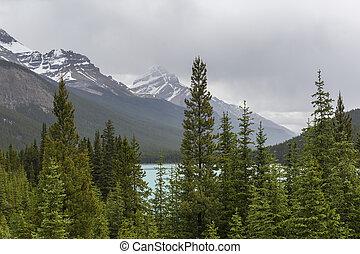 montagne rocciose, e, foresta boreale, -, jasper parco nazionale, canada