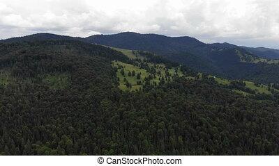 montagne, scène, forêt, au-dessus, vue