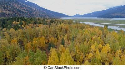montagne, scénique, gammes, automne, 4k, vue, forêt