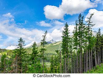 montagne, slovakia., sentiero foresta, europe., tatra